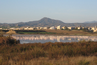Flamingos in the Salt Lake in Larnaka