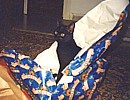 Cleo and the Christmas wrappings
